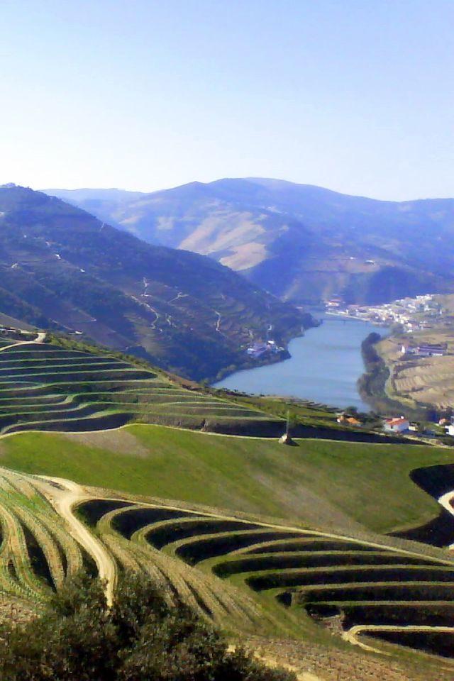 Oporto Vineyard