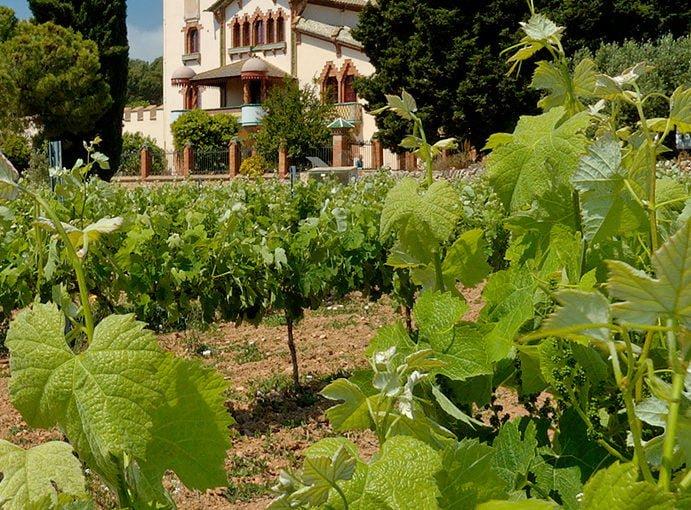 Weekly Digest – Rioja
