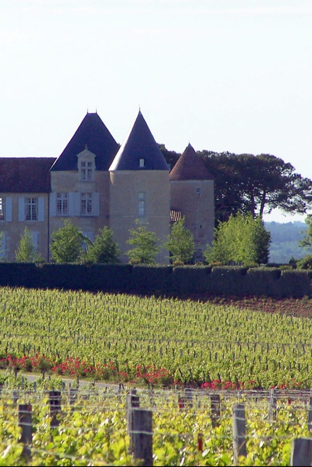 Sauternes_Château_d'Yquem_01